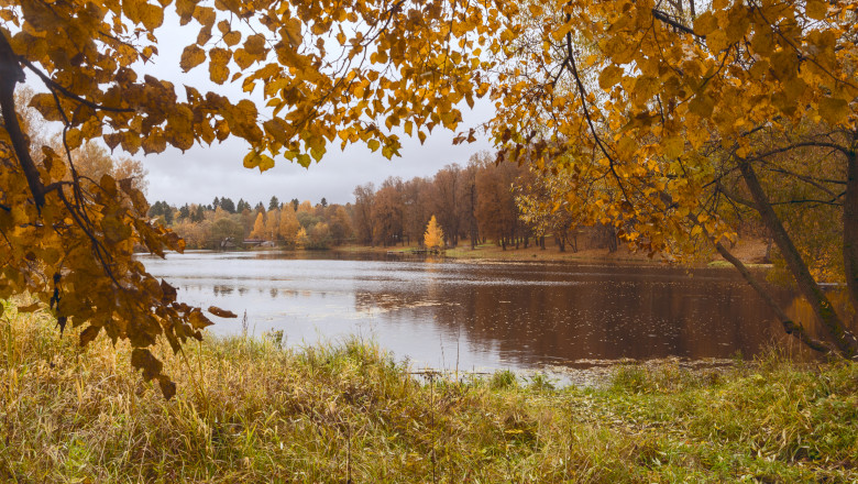 Autumn landscape with pond in the park on a rainy cloudy day.Trees with yellow foliage in the forest.