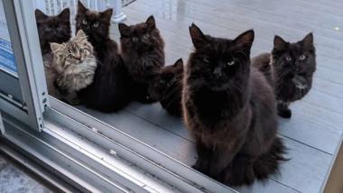O pisică vagaboandă îi prezintă pe cei șase pui ai ei femeii care a ajutat-o cu mâncare