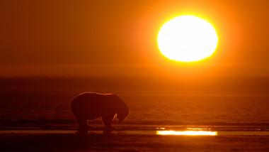 urs polar alaska apus de soare