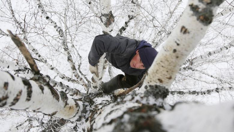Ca să aibă internet pentru cursurile online, un student dintr-un sat izolat se urcă într-un copac, la 8 metri înălțime