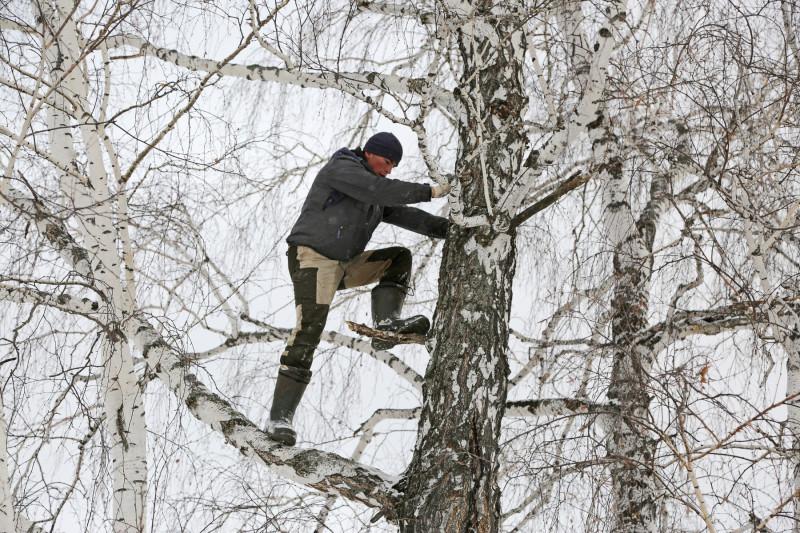 Ca să aibă internet pentru cursurile online, un student se urcă într-un copac, la 8 metri înălțime