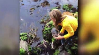 O fetiţă din Australia a salvat un rechin blocat între stânci din cauza refluxului