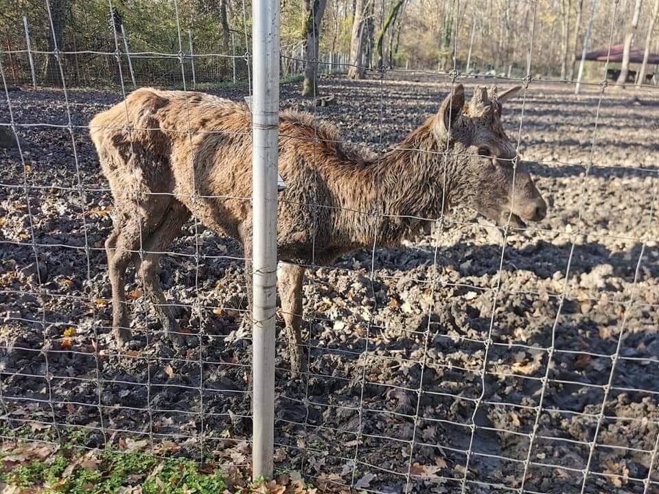 Gradina zoologica din Timisoara va fi inchisa, dupa aparitia unor imagini revoltatoare cu un caprior