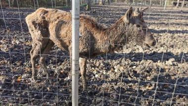 caprior zoo timisoara kola kariola