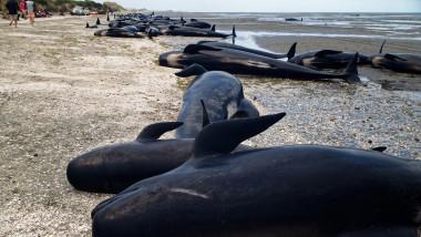 balene esuate noua zeelanda
