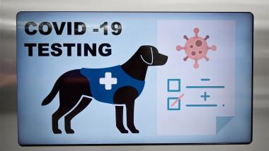 Testare pentru Covid-19 cu câini