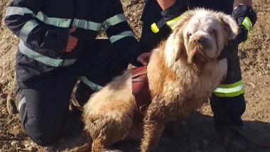 Un câine Saint-Bernard orb s-a ghidat după vocea unui pompier și a fost salvat dintr-un lac