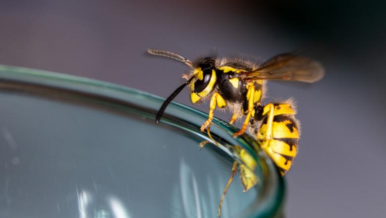 O singură viespe poate duce la prăbușirea unui avion