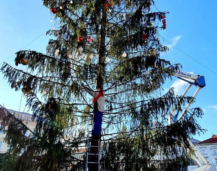 Primaria Arad cauta alt brad, dupa ce pomul de Craciun pe care a platit 7.300 de lei a ajuns tinta ironiilor