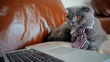 pisica la calculator munca acasa