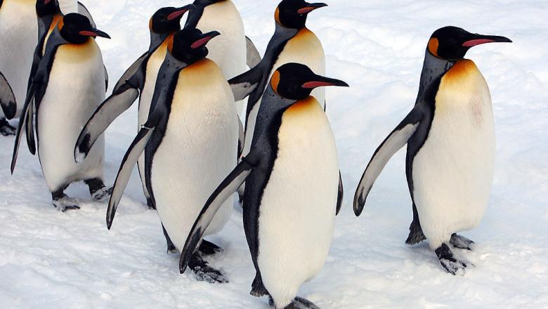 Un iceberg uriaș riscă să se ciocnească cu o insulă pe care trăiesc milioane de pinguini