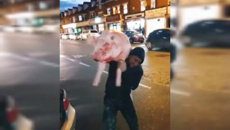 Trei români au ieșit la plimbare cu porcul pe străzile Londrei Citeşte întreaga ştire: VIDEO   Imagini virale. Trei români au ieșit la plimbare cu porcul pe străzile Londrei