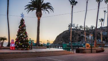 Brad de Crăciun pe plajă cu palmieri