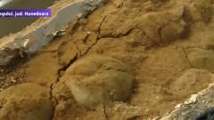 oua de dinozauri captura