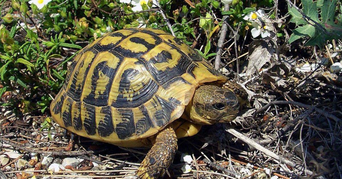 când țestoasa a pierdut în greutate