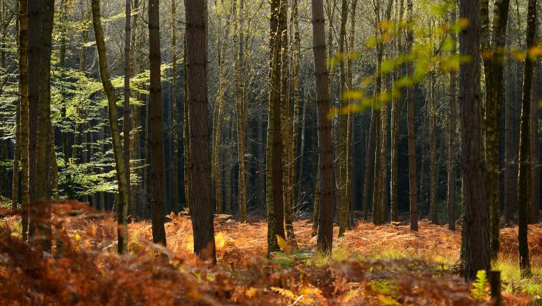 Autumn In The UK