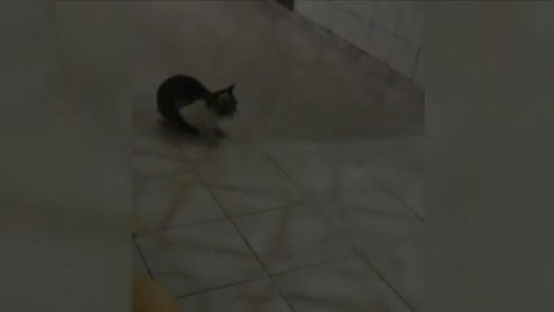 pisica spital