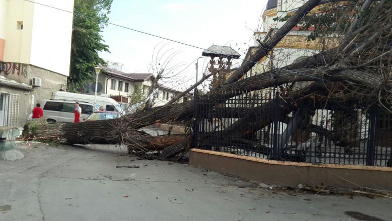 copac cazut gard biserica