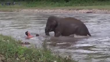 elefant salveaza