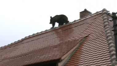urs sibiu_capturi digi24 (1)