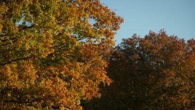 Deer On An Autumn Morning At Ashton Court