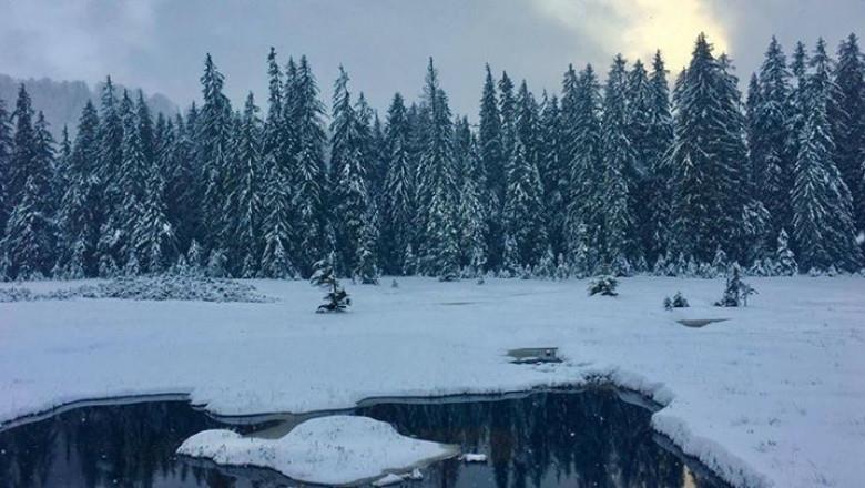 munte Apuseni brazi iarna