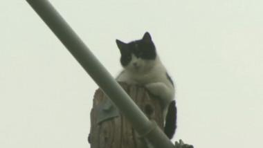 pisica pe stalp