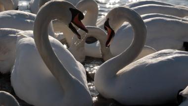 Slimbridge Wetland Centre Prepares For Late Influx Of Wintering Birds