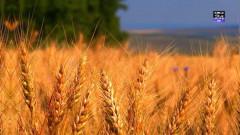 grau agricultura digi24