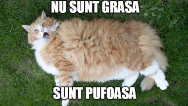 pisica-grasa-pufoasa