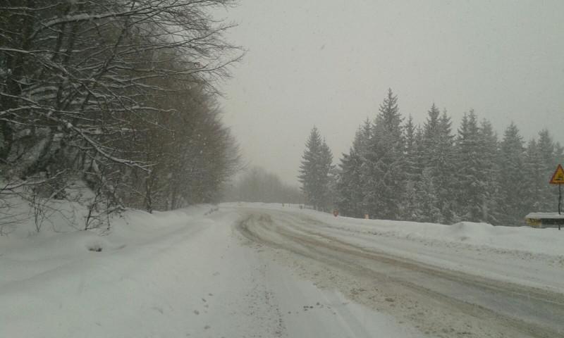 ninsoare Pasul Gutau Maramures 040117 (6)