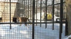 tigru circ
