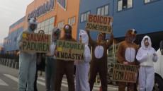 boicot lemn