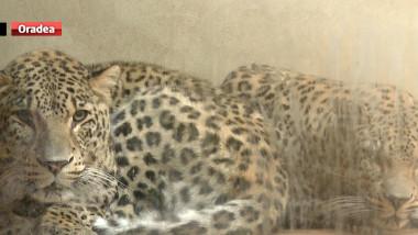 zoo caldura