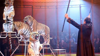 Circus Krone Christmas Show 2015