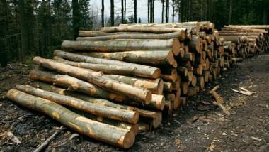 in lupta cu mafia lemnului