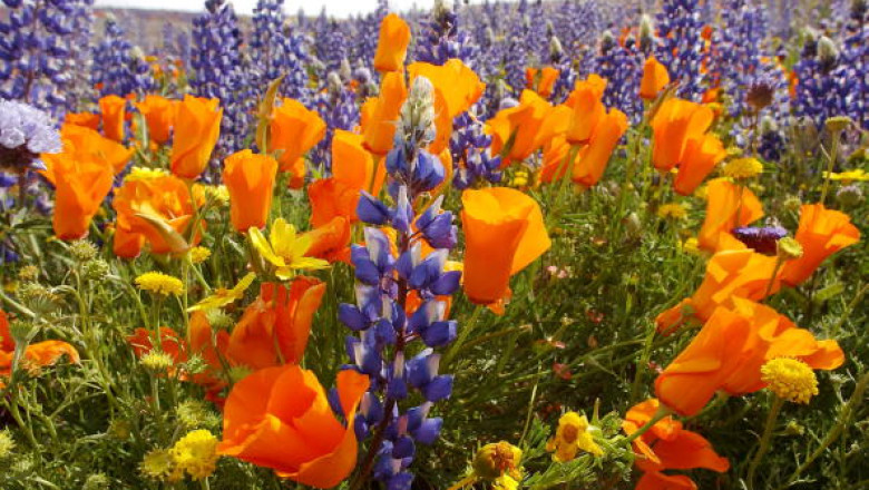 Wildflowers Signal Comeback from Drought and Fires