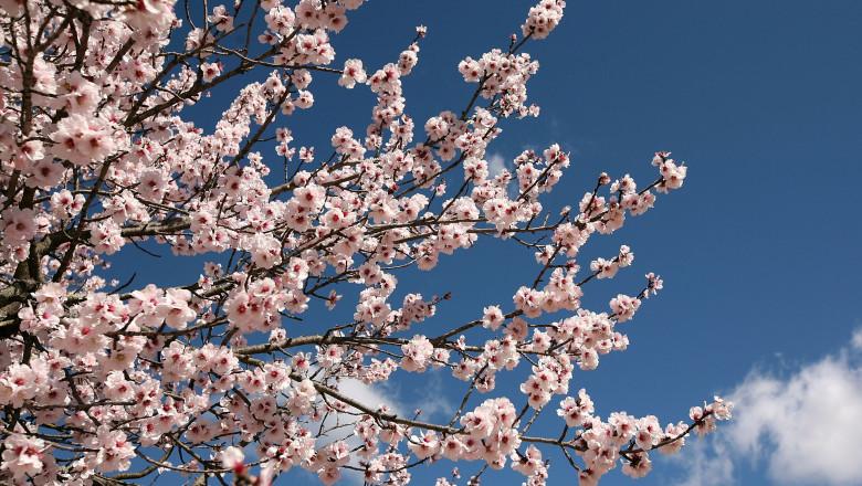 vreme meteo primavara soare cer senin flori