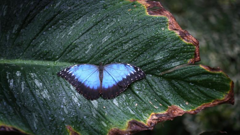 Gardener And TV Presenter Rachel de Thame Visits The Butterflies In The Glasshouse At RHS Garden Wisley