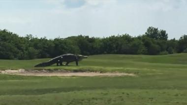 aligator golf