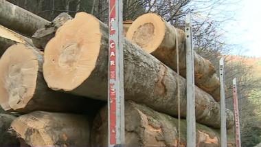masina lemne padura - captura