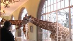 girafe la hotel