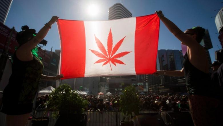steag canada marijuana
