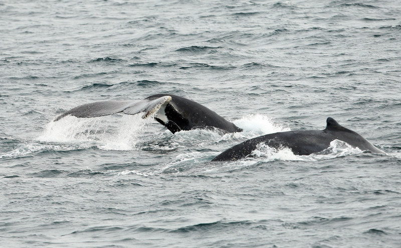 National Whale Day Celebrated As Whale Watching Season Gets Underway