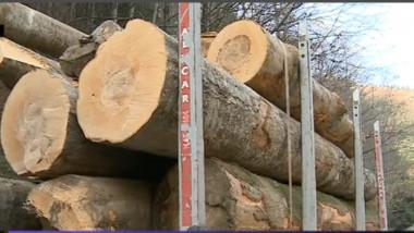 mafia lemnului