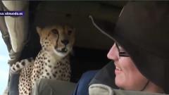 ghepard safari