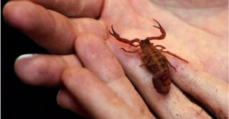 scorpion-tw