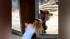 fetita si ursul