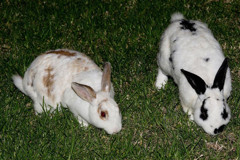 Sydney Harbour Bunnies Face Easter Cull
