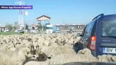 centura blocata de oi
